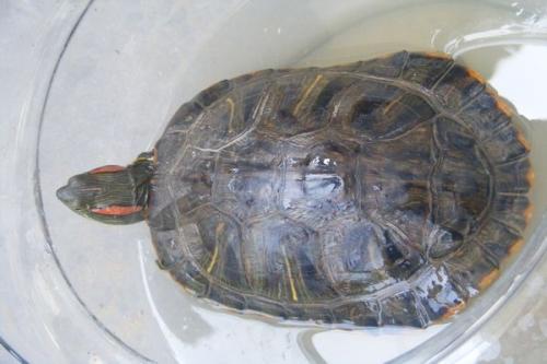 目前,该乡新发现的石碑和海龟,引得不少县内外专家学者前往探究.