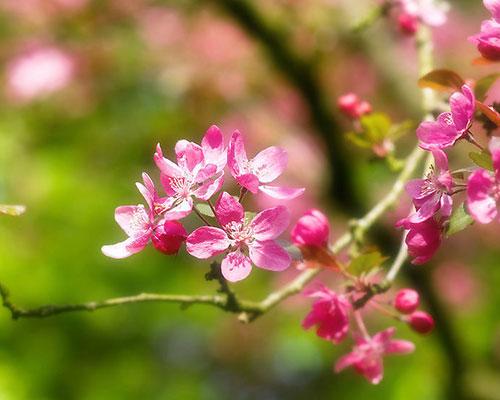 杨桃花步骤图解