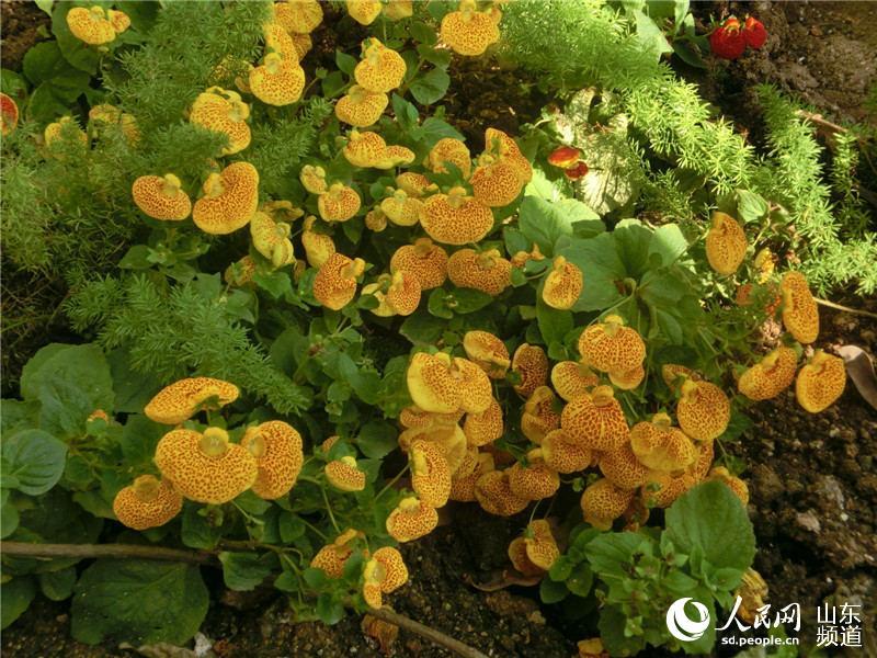 (关注青岛世园会)植物馆800种奇花异草