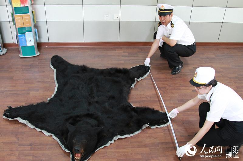 家二级保护动物黑熊皮一张