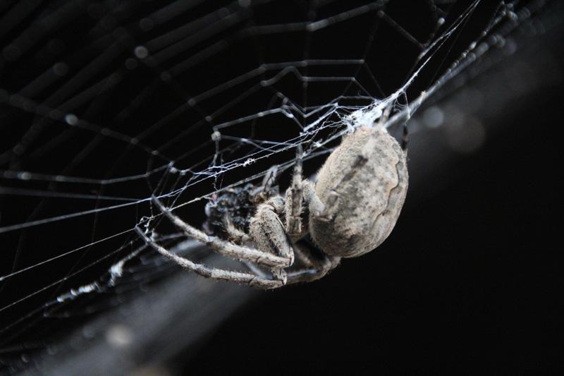 记者捕食苍蝇蜘蛛据势张网实拍巨型分割在线视频图片