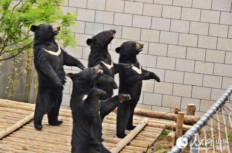 动物群体摄影图