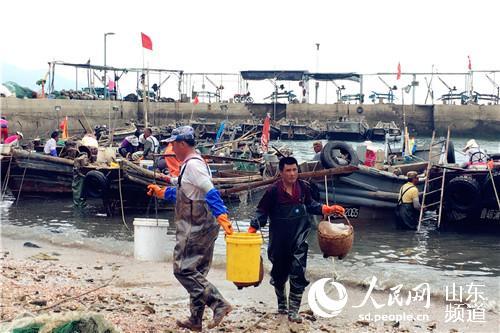 海蜇收获季 青岛崂山区黄山渔民海蜇捕捞技艺世代传承