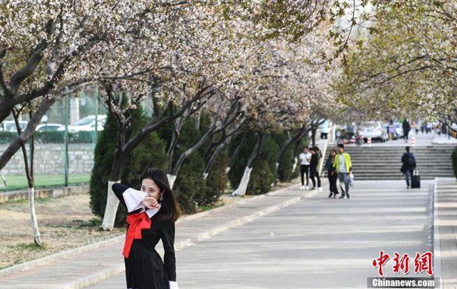 """济南高校""""花街""""绽放吸引民众观赏"""