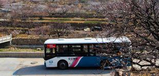 乘公交赏樱桃花 青岛这些景点线路请收好