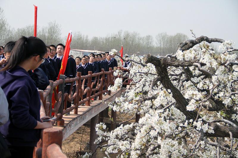 冠县:第十三届梨园文化观光周梨花似雪迎宾客