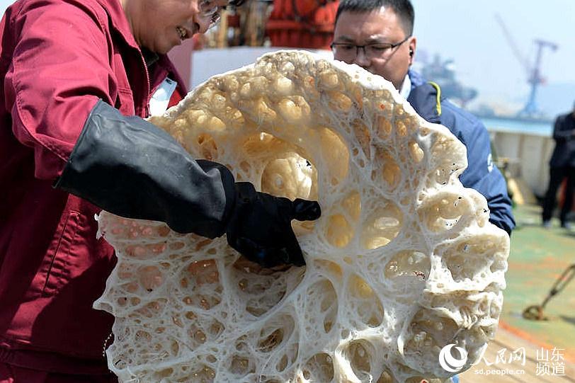 科研人员展示采集到的巨型玻璃海绵。