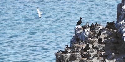 青海湖 鸟岛谢客