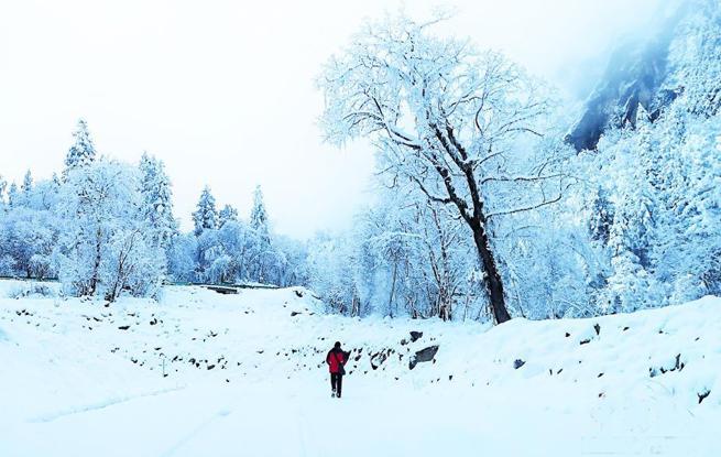 四川理县各景区迎来瑞雪 雪花美景吸眼球