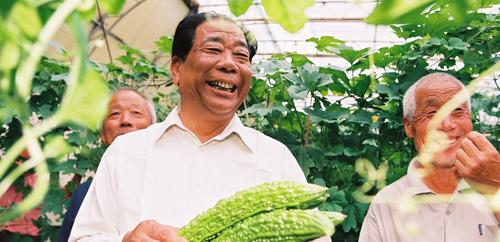 """山东:""""冬暖式大棚""""改写中国""""菜篮子""""历史         因农起步、以菜为先的山东寿光三元朱村创造的""""冬暖式大棚"""",拉开了全国""""蔬菜革命""""的帷幕。"""