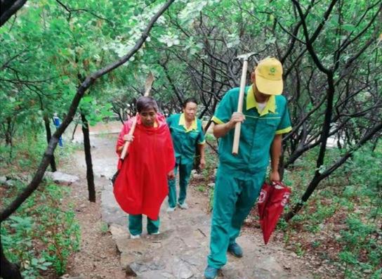 工作人员对受损树木展开科学救助。