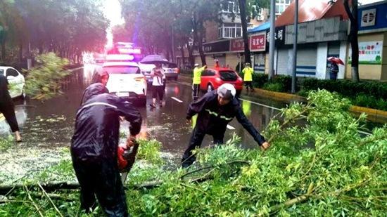 对于主干折断、劈裂的树木,为行道树的,进行伐除。