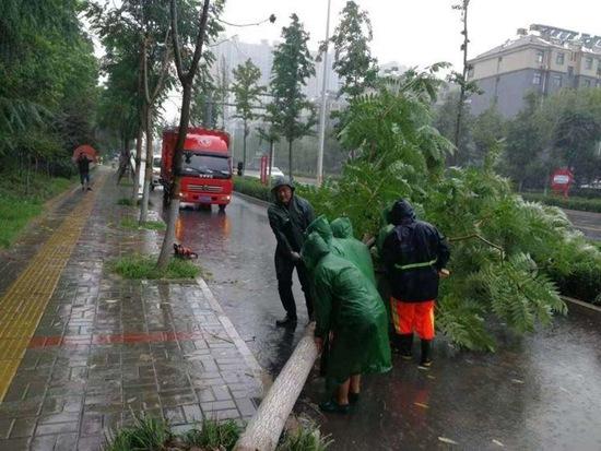 对受损树木进行扶正。