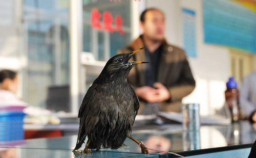 小鸟受伤热心市民救助