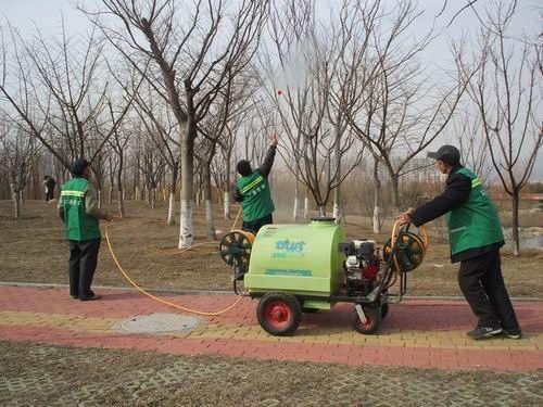 日照开展春季树木病虫害预防工作