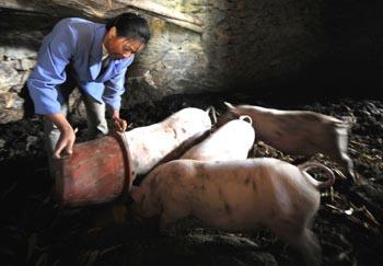 农业部畜牧业司巡视员陈伟生此前在接受《经济参考