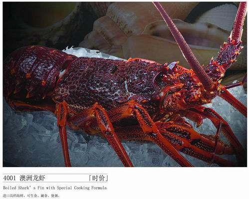 大龙虾品种大全图解