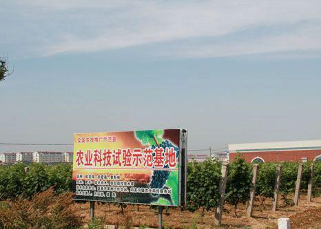 山东蓬莱刘家沟打造中国葡萄酒特色乡镇