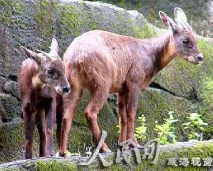 """动物朝夕相处,""""摸清""""它们的饮食习惯和台湾喂养方法"""